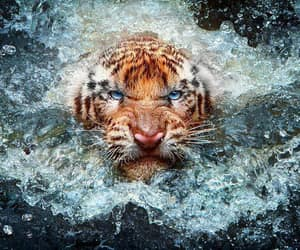 blue eyes, determined, and ferocious image