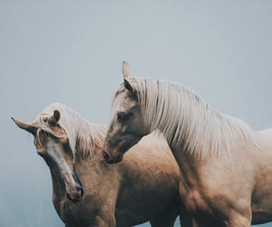 horse, animal, and aesthetic image