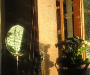 flower, mirror, and photography image