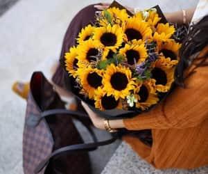 flower, ًورد, and عباد الشمس image