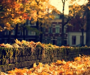 autumm, be you, and beauty image