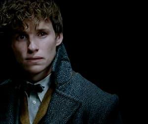 albus dumbledore, fantastic beasts, and scamander image