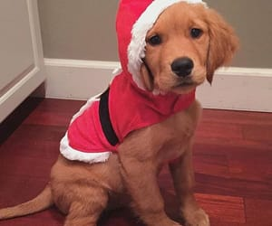 puppy, dog, and christmas image