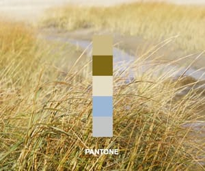 beach, color palette, and nature image