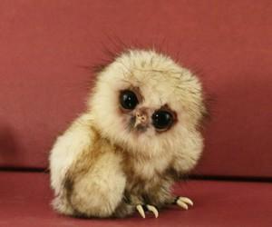 cute, owl, and animal image