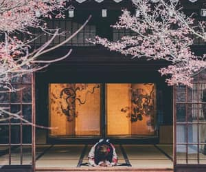 asia, sakura, and kyoto image