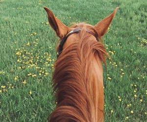 animals, pic, and avatar image