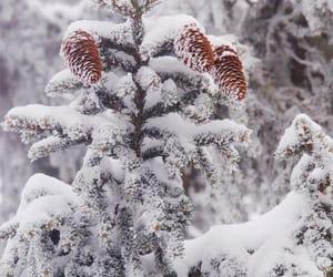 pine tree, tree, and snow image