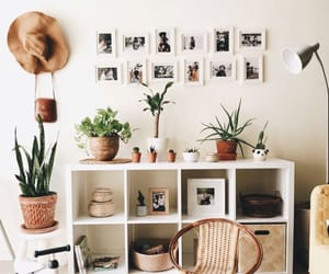 picture, interior design, and plants image