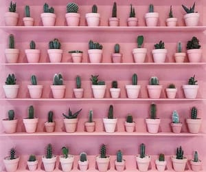 cactus, pink, and background image