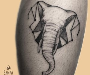 animal, elefante, and elephant image