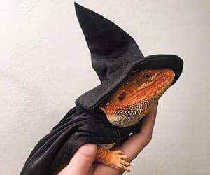 gecko, lizard, and reptile image