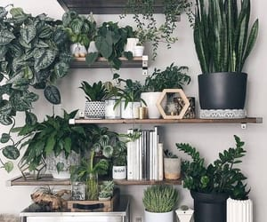 plants, green, and decor image