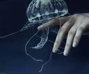 beautiful, blue, and jellyfish image
