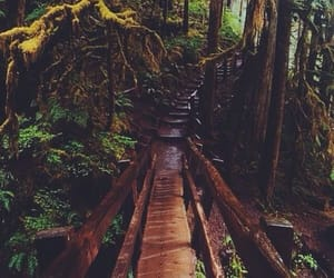 nature, adventure, and green image