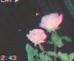 flower, rose, and vintage image