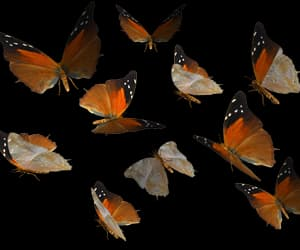 butterfly and png image