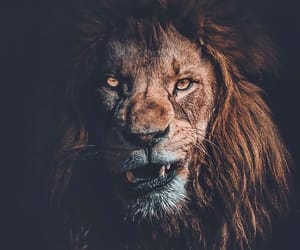 lion, nature, and adventure image
