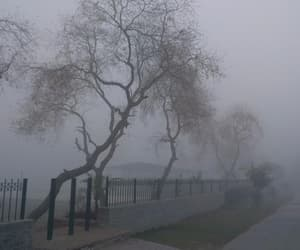 grunge, pale, and tree image