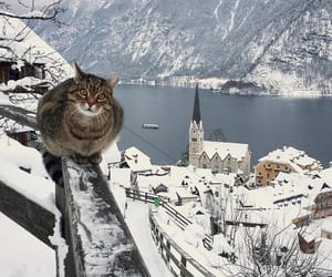 cat, travel, and nature image
