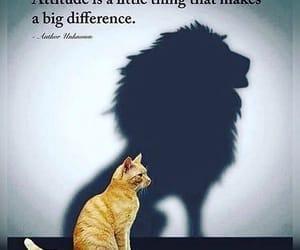 attitude, lion, and cat image