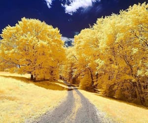 nature, yellow, and blue image