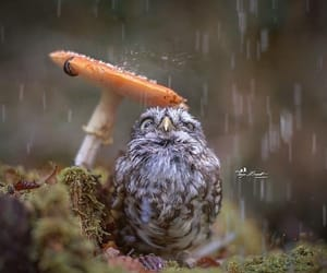 owl, rain, and animal image