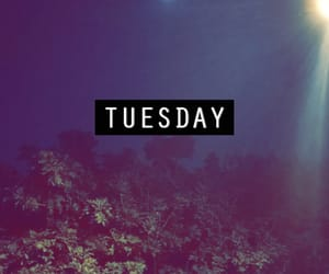 nature, night, and tuesday image