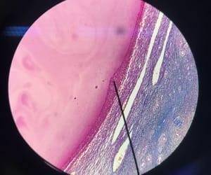 college, medicine, and microscope image