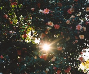 flowers, sun, and love image