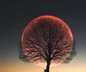 moon, nature, and tree image
