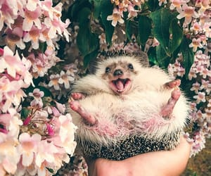 flowers, hedgehog, and photography image