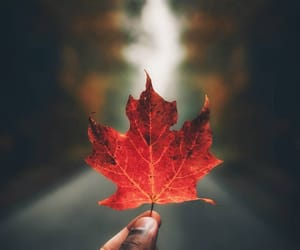 autumn, wow, and canada image