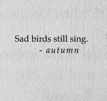 quotes, sad, and birds image