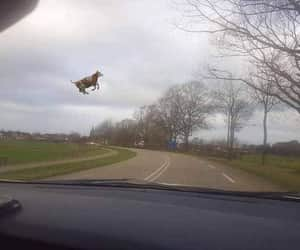 cow, tornado, and earth walker in the sky image