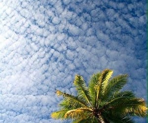clouds and palm tree image