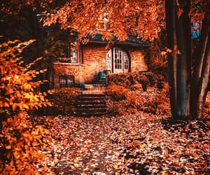 autumn, beautiful, and photography image