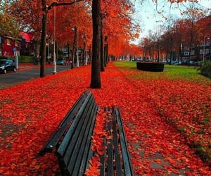 red, autumn, and nature image