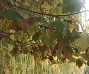 arbol, otoño, and iphone image