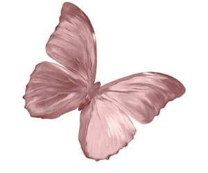butterfly, pink, and png image