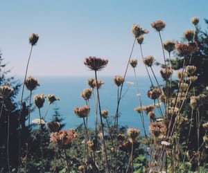 flowers, indie, and nature image