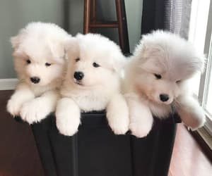 puppy, dog, and pet image