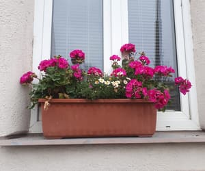 bloom, flowerpot, and home image