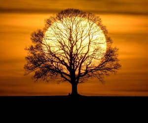 nature, sun, and tree image