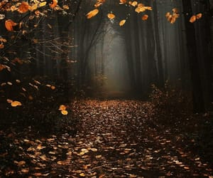 autumn, dark, and fall image