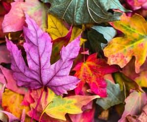 autumn and purple image