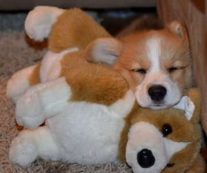 beautiful, cute, and puppies image