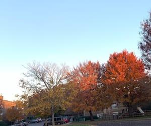 fall, orange, and usa image