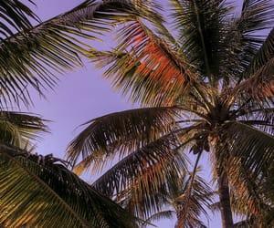 beach, purple, and palm trees image