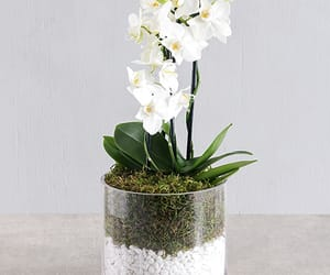 orchid stones beautiful and garden simplicity diy image